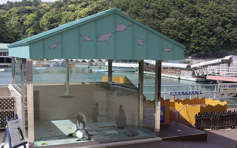 下田海中水族館 オウサマペンギン舎