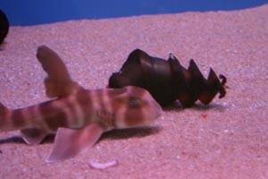 サメの子供達