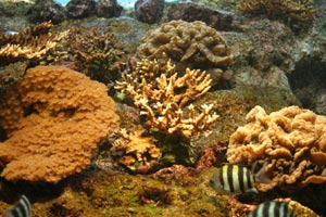 サンゴのカタチ イソバナ