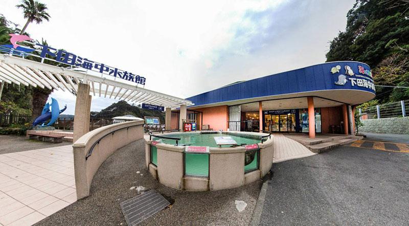 下田海中水族館 ウミガメ池
