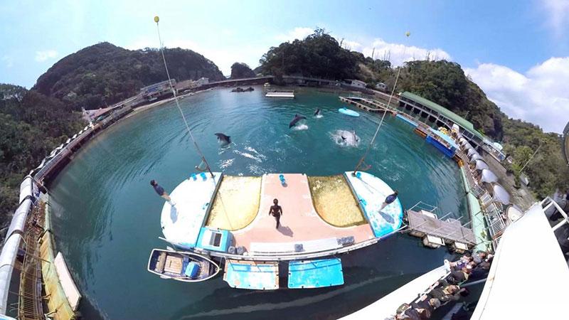 下田海中水族館 海上ステージ
