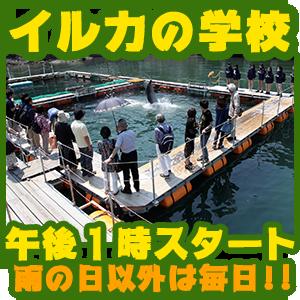 下田海中水族館 いるかの学校 毎日 13:00 スタート