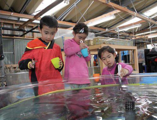 下田海中水族館は2018もイベント盛りだくさん!