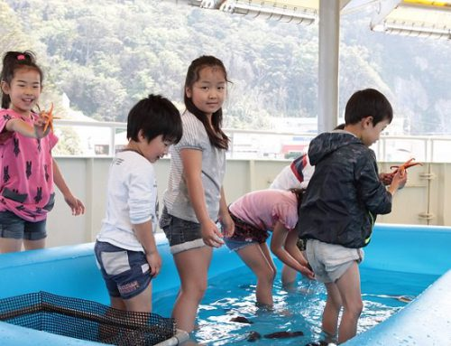 2017 下田海中水族館の夏休み