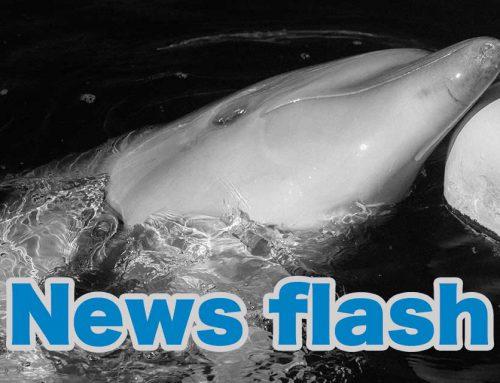 下田海中水族館 ニュースフラッシュ