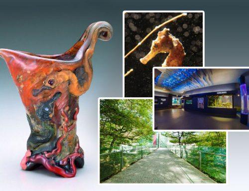 箱根ポーラ美術館と下田海中水族館のコラボレーション企画 特別展を3月17日より開催。