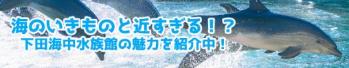 海のいきものと近すぎる!?下田海中水族館の魅力を紹介中!