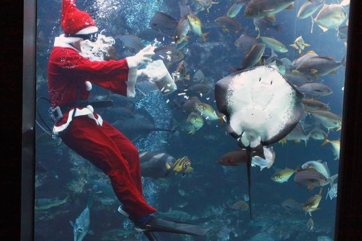 サンタクロースが餌付けショー始めます!