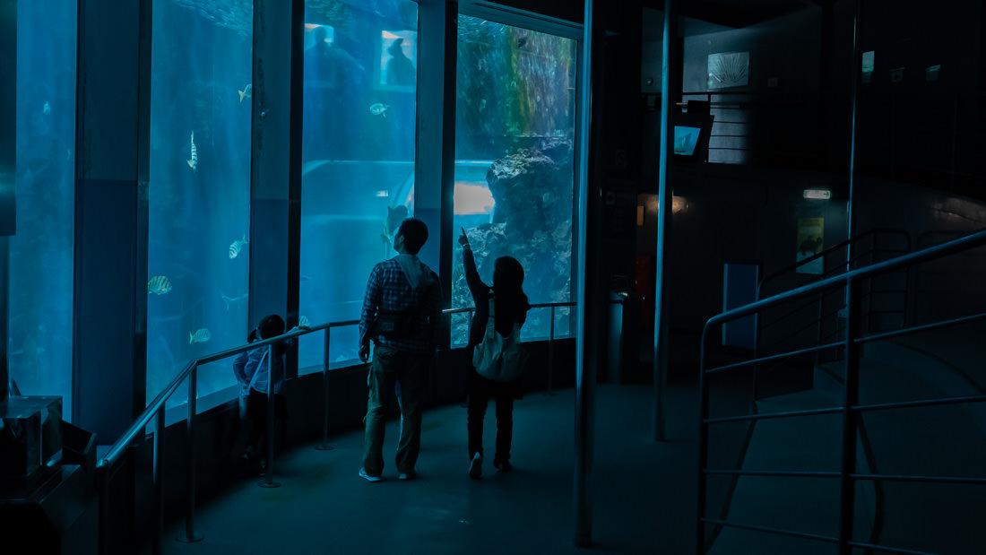 下田海中水族館 アクアドームペリー号