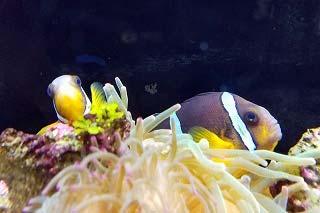 伊豆の海の生物館『うみめぐり』