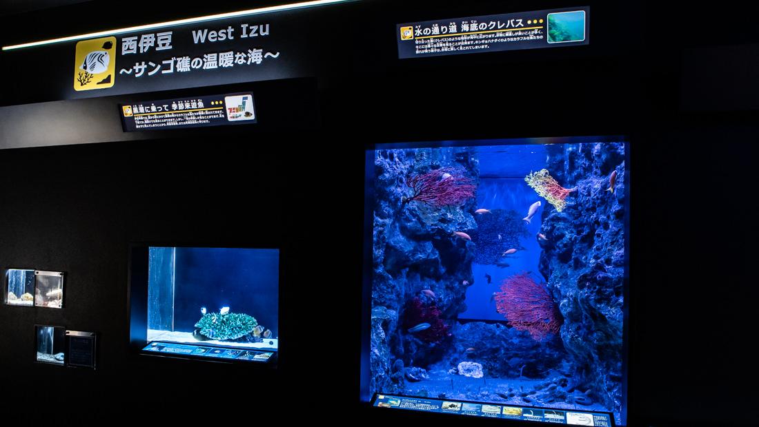 下田海中水族館 海の生物館シーパレス