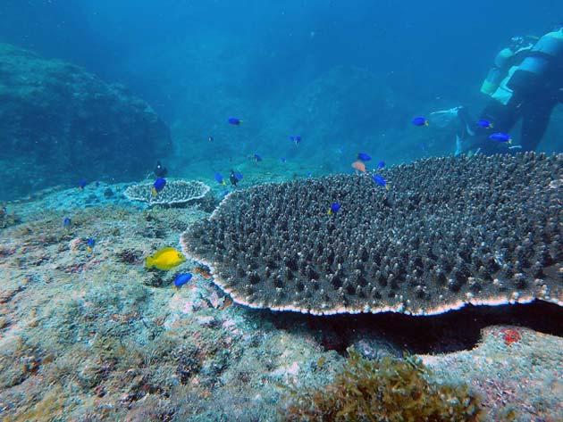 3月5日はサンゴの日! 伊豆のサンゴ展開催! | 下田海中水族館